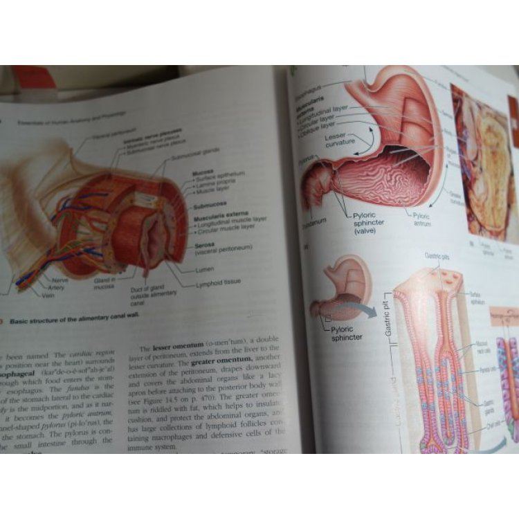 Fantastisch Holes Essentials Of Human Anatomy And Physiology 12th ...